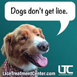 Pets and Head Lice blog